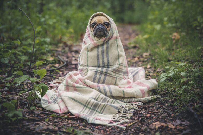 毛布に包まれた犬