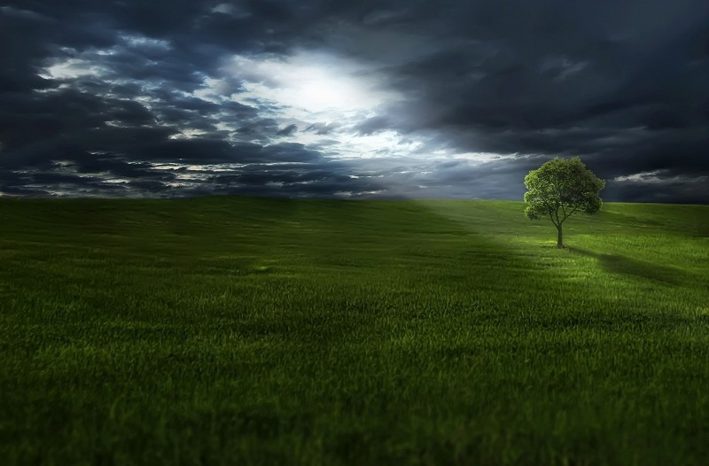 tree-on-meadow-under-stormy-sky