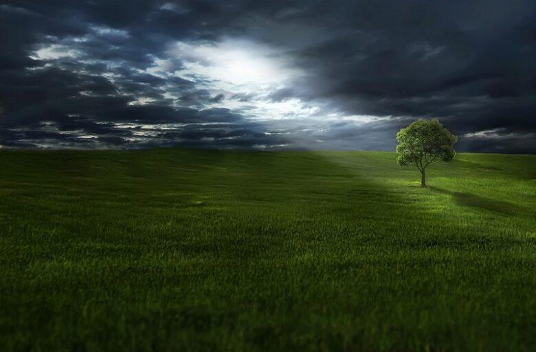 tree-on-meadow-under-stormy-sky